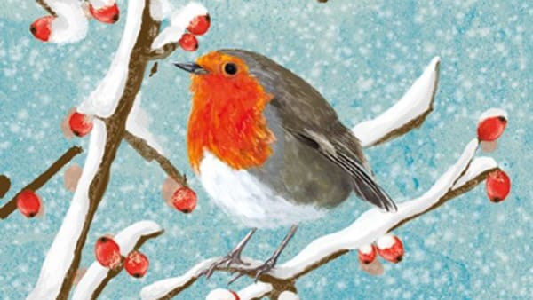 Robin On Berry Branch - Christmas Cards (Pack of 10) - January Sale