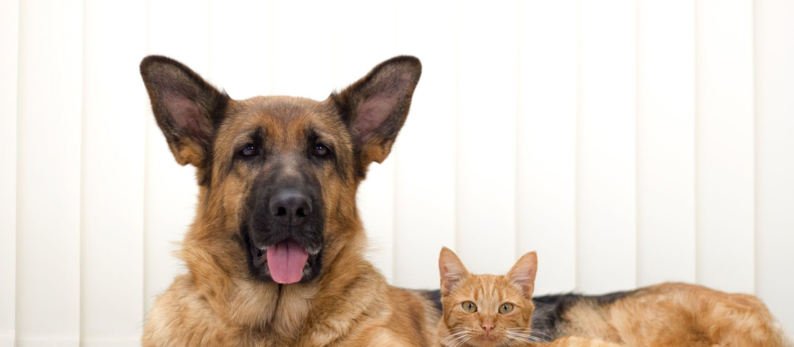 Thyroid disease in dogs and cats